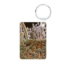 Potato blight fungus, SEM Keychains
