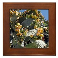 Prickly pear cacti (Opuntia sp.) Framed Tile