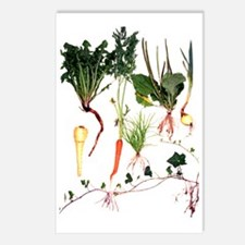 Root systems Postcards (Package of 8)
