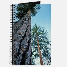 Pine trees Journal