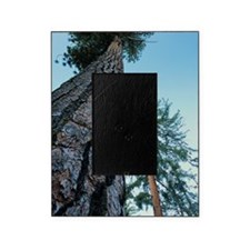 Pine trees Picture Frame