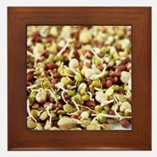 Sprouting beans Framed Tile