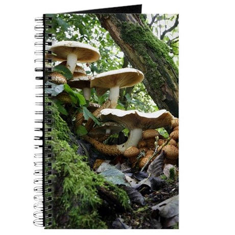journal document in relation to fungi