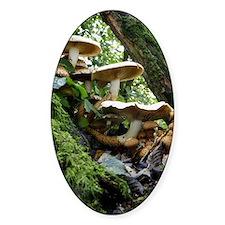 Shaggy pholiota fungi Decal