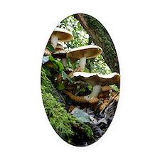Shaggy pholiota fungi Oval Car Magnet