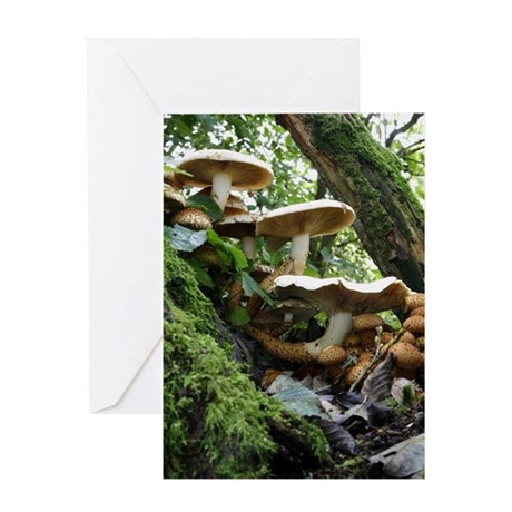 Shaggy pholiota fungi Greeting Card