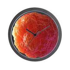 Stem cell, computer artwork Wall Clock