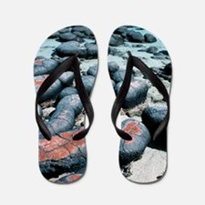 Stromatolites Flip Flops