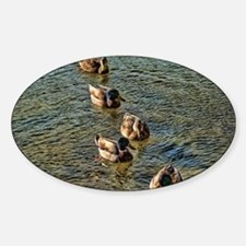 wild ducks Decal