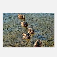 wild ducks Postcards (Package of 8)