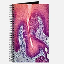 Taste bud, light micrograph Journal