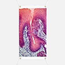 Taste bud, light micrograph Banner