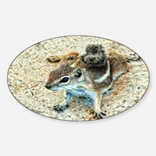 ground squirrel Decal