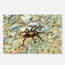 tarantula Postcards (Package of 8)