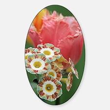 Tulip (Tulipa 'Fancy Frills') Decal