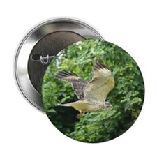 """Red-tailed Hawk 2.25"""" Button"""