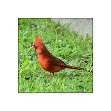 "Cardinal Square Sticker 3"" x 3"""