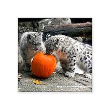 "Snow Leopard and Pumpkin Square Sticker 3"" x 3"""