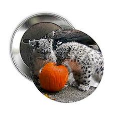"""Snow Leopard and Pumpkin 2.25"""" Button"""