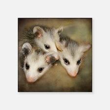 "Possum BSnuttles Square Sticker 3"" x 3"""