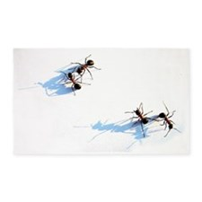 Ants on white background 3'x5' Area Rug