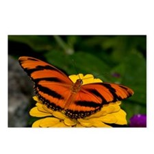 Banded Orange Butterfly 5 Postcards (Package of 8)
