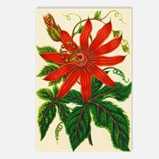 Passion flower Postcards (Package of 8)