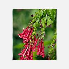 Hybrid fuchsia (Triphylla Group) Throw Blanket
