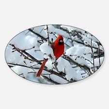 Snow Cardinal Sticker (Oval)