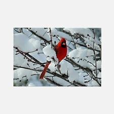 Snow Cardinal Rectangle Magnet