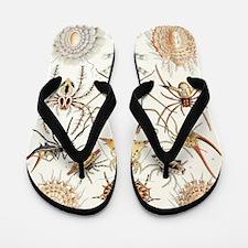 Arachnid organisms, artwork Flip Flops