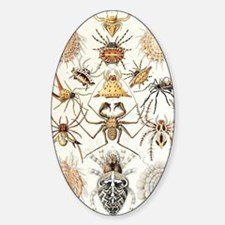 Arachnid organisms, artwork Sticker (Oval)