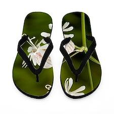 Bladder campion (Silene vulgaris) Flip Flops