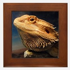 .young bearded dragon. Framed Tile