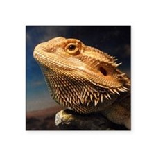 """.young bearded dragon. Square Sticker 3"""" x 3"""""""