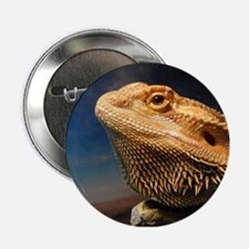 """.young bearded dragon. 2.25"""" Button"""