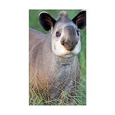 Brazilian tapir Decal