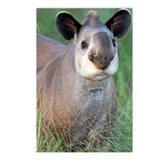 Brazilian tapir Postcards (Package of 8)
