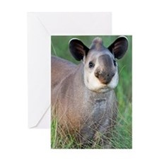 Brazilian tapir Greeting Card