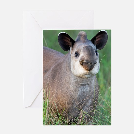 Brazilian tapir Greeting Card