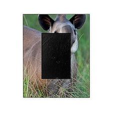 Brazilian tapir Picture Frame