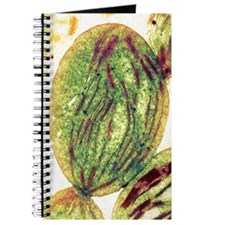 Chloroplast, SEM Journal