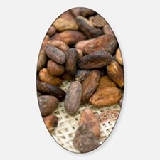 Cocoa beans Sticker (Oval)