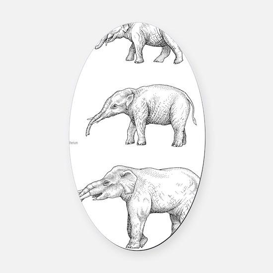 Elephant evolution, artwork Oval Car Magnet