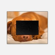 dreamy dog Picture Frame