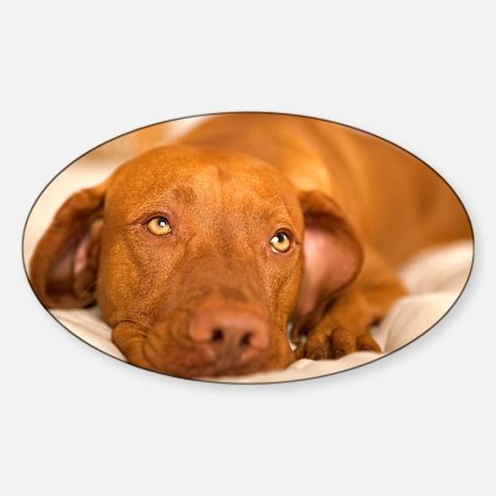 dreamy dog Sticker (Oval)