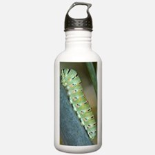Common Swallowtail lar Water Bottle