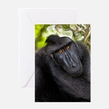 Crested black macaque Greeting Card