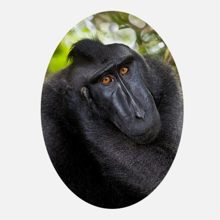 Crested black macaque Oval Ornament