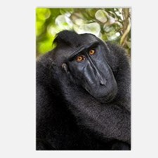 Crested black macaque Postcards (Package of 8)